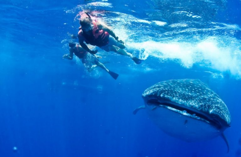 freinds with whale shark
